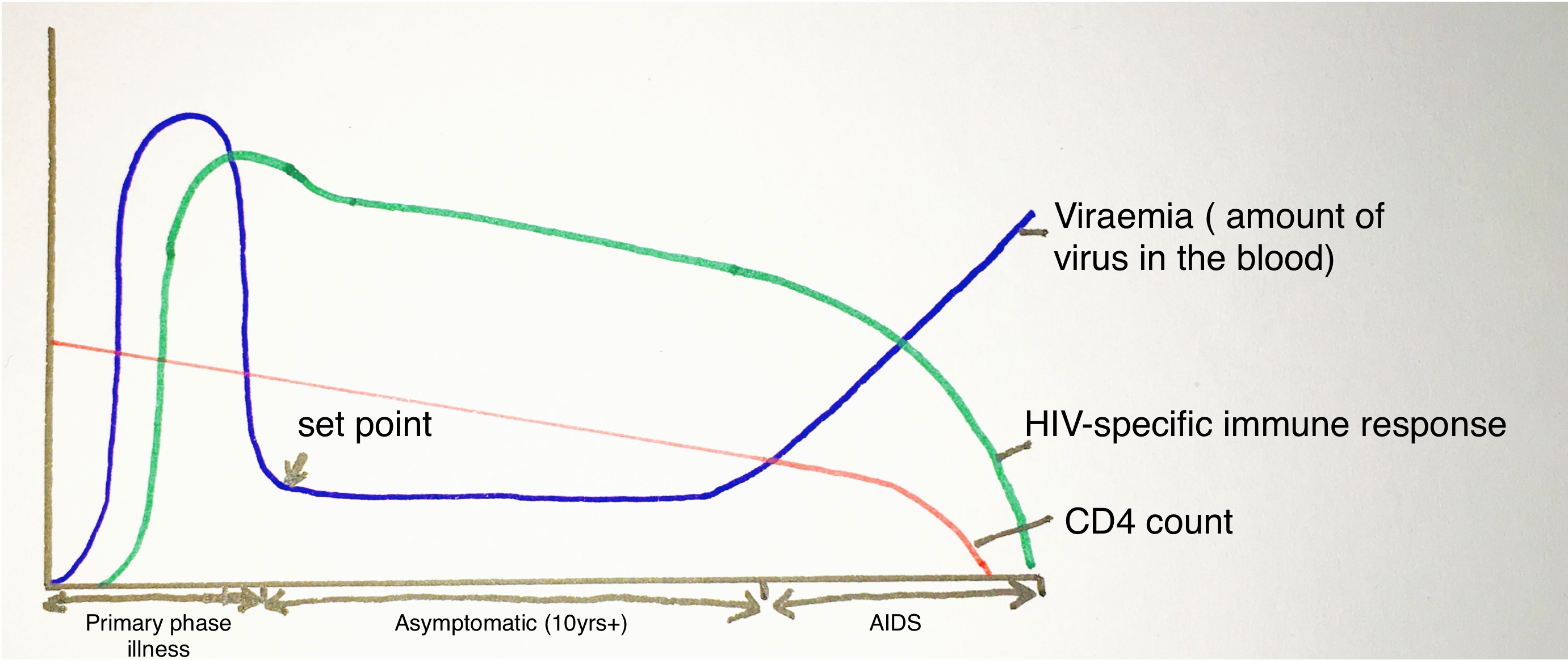 Course of HIV infection